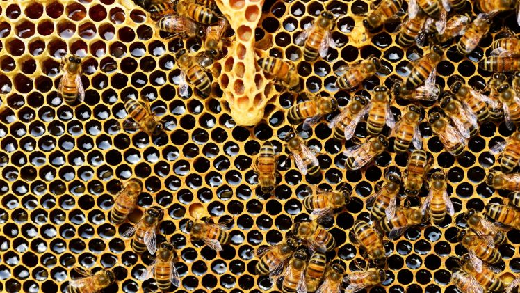 Why Manuka Honey Is the Best For You